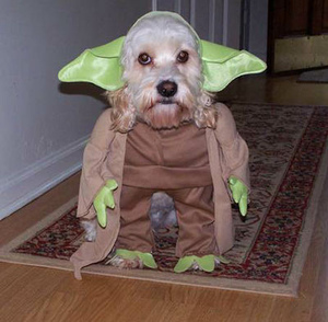 Costume_dogs11_m_2