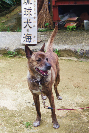 Okinawa_133