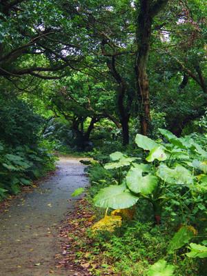 Okinawa_141
