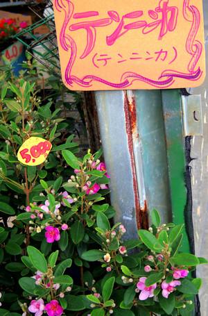 Okinawa_371