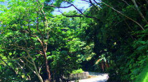 Okinawa_475