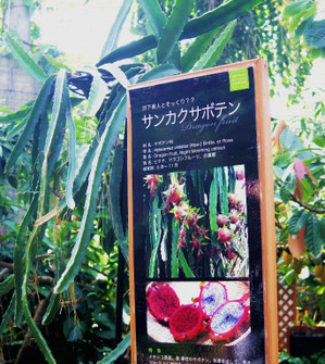 Okinawa_549