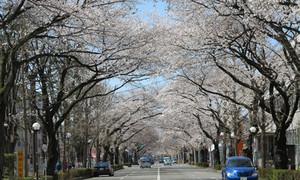 Sakuradouri